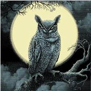 moon_owl_300W